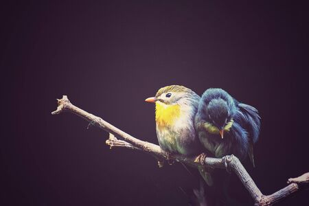 The thrush nightingale (sprosser) the branch. Banco de Imagens