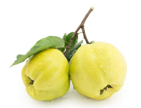 membrillo: membrillo, manzana membrillo, manzana sobre un fondo blanco Foto de archivo