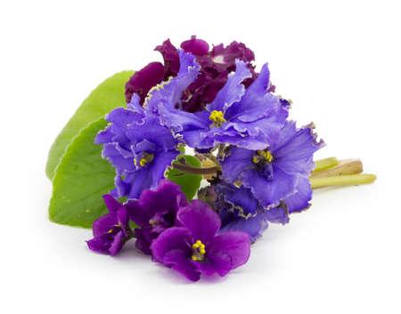 Violett, Blume isoliert auf weißem Hintergrund