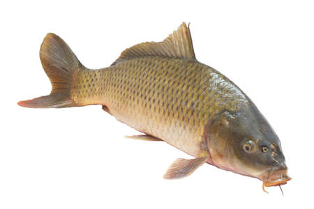 karper vissen geïsoleerd op witte achtergrond