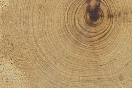 close-up wooden cut texture photo