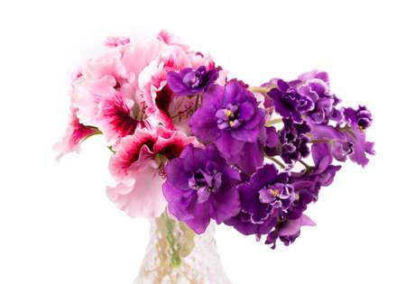 violet en geranium bloemen op een witte achtergrond