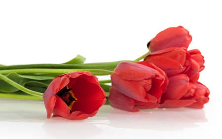 loveliness: blooming tulip isolated on white background Stock Photo