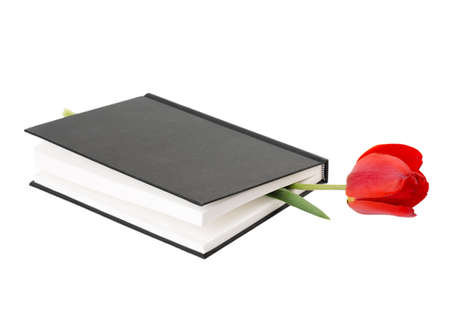 tulip flower book on a white background photo
