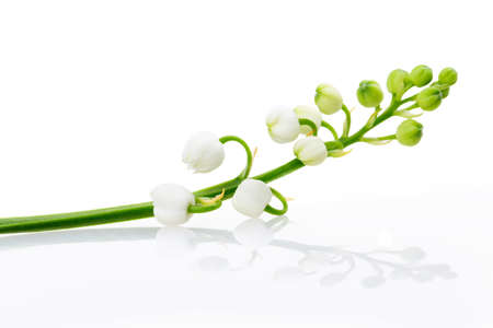 lily of the valley isolated on white background