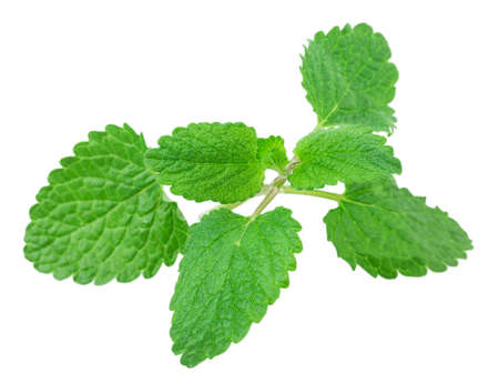 lemon balm, mint isolated on white background photo