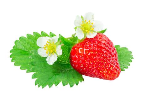 ripe strawberries isolated on white background photo