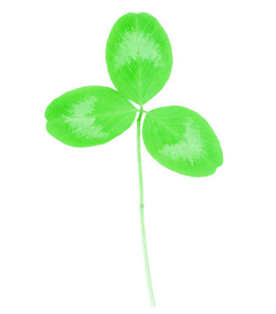 clover isolated on white background Stock Photo - 21290507