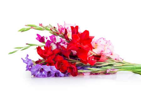 iris blossom: multicolored flowers gladiolus isolated on white background