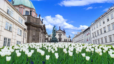 white tulips on the background of the building Stock Photo