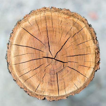 木製サークル テクスチャのスライスの背景
