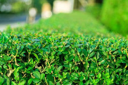 planten gazon