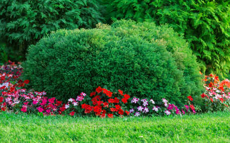 plants lawn and alley green background Stock Photo