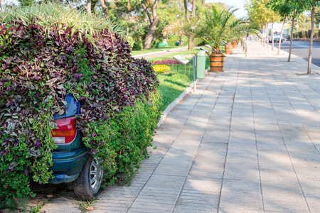 utilization: old car under the plants