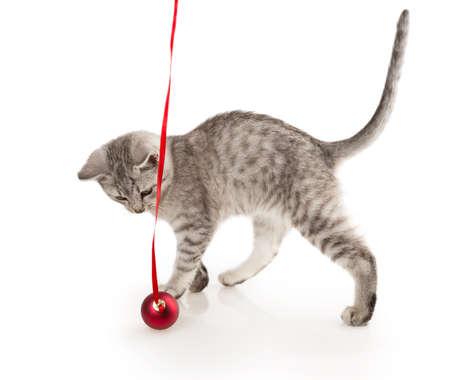 grijs gestreepte tabby kat kitten geïsoleerd op witte achtergrond