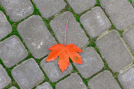 yellow leaf on paving stone  photo