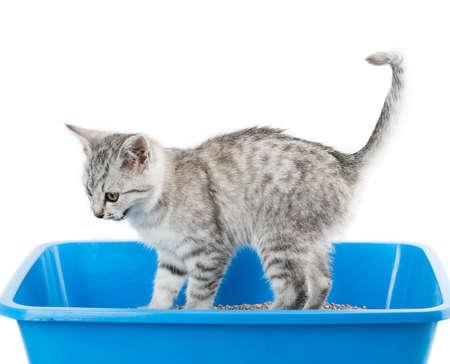 cat toilet isolated on white background Reklamní fotografie