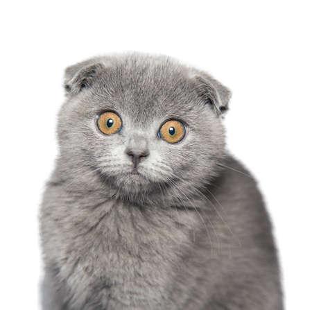cat isolated on white background photo
