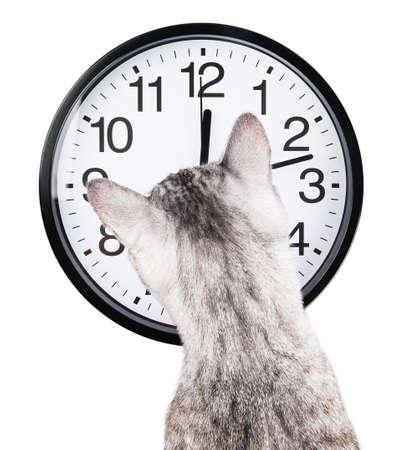 Uhr Katze auf weißem Hintergrund