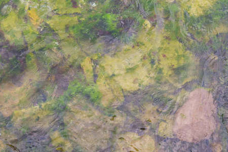 weed sea plant texture seagrass photo