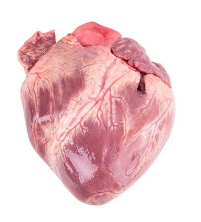 raw heart Isolated on white background photo