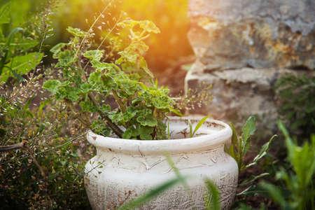 sunny day: flores soleados d�as arriate olla exterior Foto de archivo
