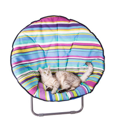 lounger: lounger cat Isolated on white background Stock Photo