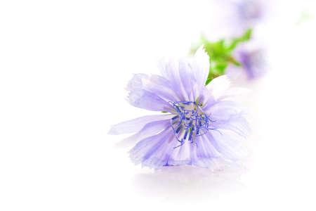flower isolated on white background photo