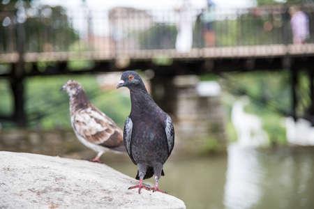 dove bird day outside background photo