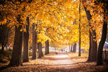 park path: Autumn Park path golden leaves on trees