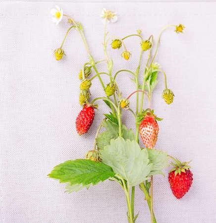 white napkin: strawberries on a white napkin