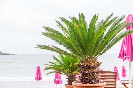 palm frond: green palm frond blue Sea Archivio Fotografico