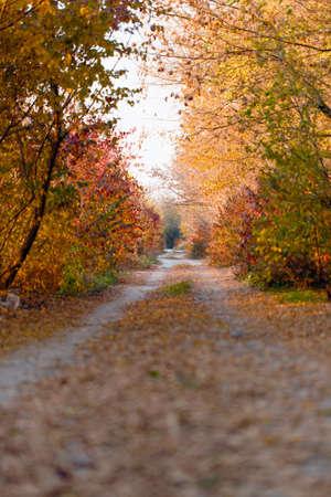 landscape rural: Autumn park road nature background