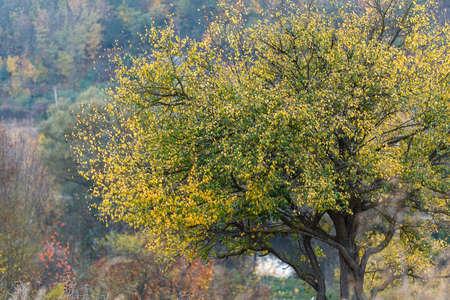 nature landscape: tree dry leaves nature landscape nature