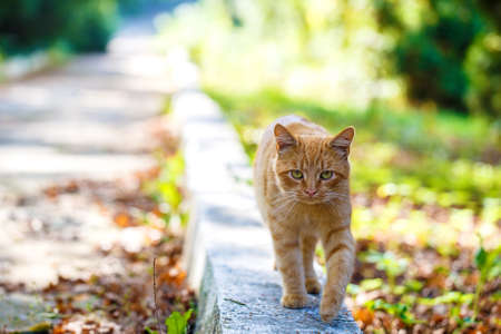 park path: red cat on park path outside