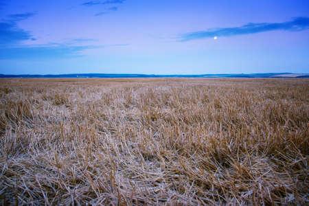 beveled: beveled field of wheat spikelets landscape Stock Photo