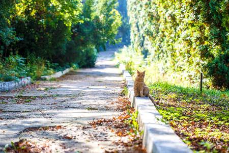 park path: red cat park path outside