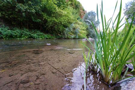 canne: paesaggio alberi fiume canne natura