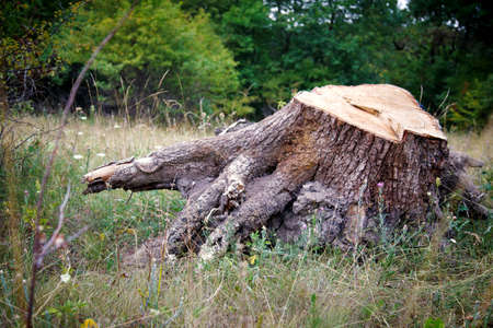 truncated: tree stump truncated old tree on a background of grass Stock Photo