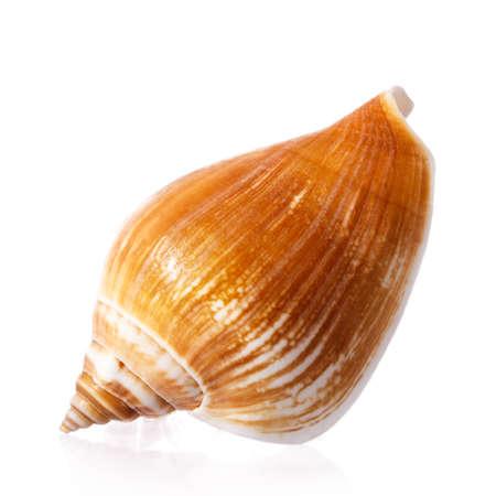 shell Isolated on white background Stock Photo