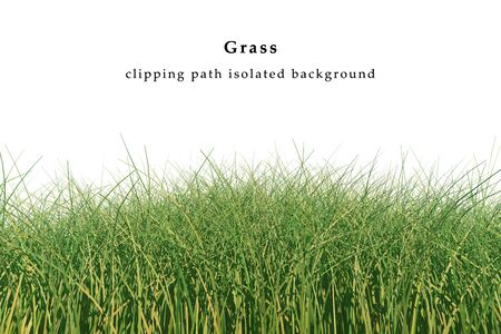 Dry grass isolated on white background include clipping path. 3D illustration