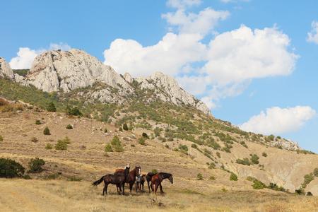 Graze horses in mountains landscape