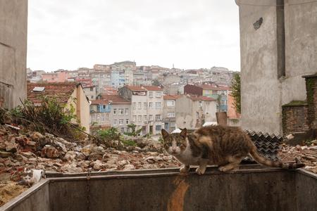 Istanbul Straße Die Katze. Truthahn