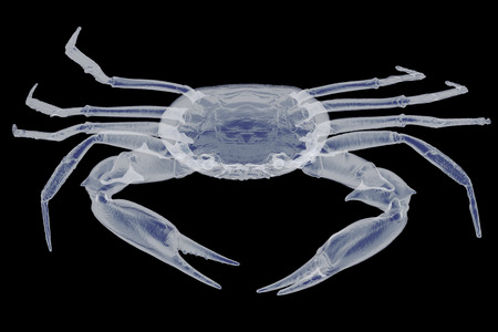 X-ray crab isolated. 3d render