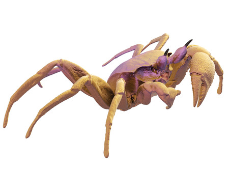 Ghost crab isolated on white include clipping path. 3d render.