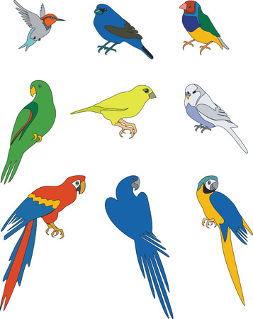 birds set in color  01 Vector