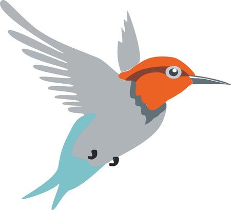 oiseau dessin: Oiseau Colibri en couleur 01