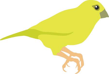 Canarino uccello in colore 01 Vettoriali
