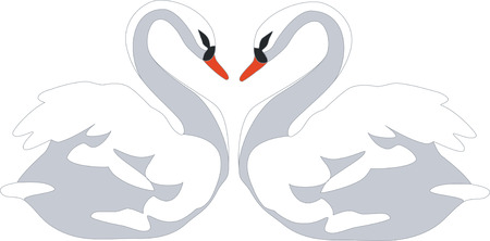 gracious: swan couple in color 01