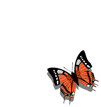 Vector. Butterfly on paper  05